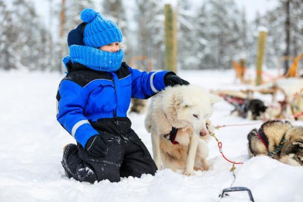Dog Sledding Mammoth, Dog Sledding Near Me, Dog Sled Tours, Mammoth Lakes Winter, Dog Sledding History, Mammoth Lakes Condos, Sledding in Mammoth, Husky Sled Dogs