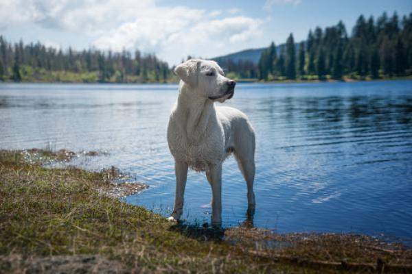 Mammoth Lakes, mammoth lakes resort, dog-friendly restaurants, Mammoth Mountain, Mammoth Mountain Gondola, Mammoth Lakes Hiking